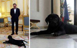 Hollande-et-son-labrador