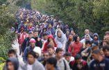Serbie – La route des Balkans a-t-elle jamais été fermée ?